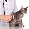 Ветеринарные клиники в Верховье